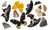 Insect collection of butterflies — Stock Photo