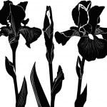 květy kosatce — Stock vektor