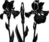 Irises flowers — Stockvector