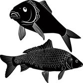 Carp fish isolated on a white background — Stock Vector