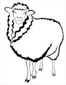 Koyun kuzu koç — Stok Vektör
