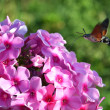 Little bird flies to pink flowers — Stok Fotoğraf #28842561