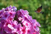 Little bird flies to the pink flowers — Stock Photo
