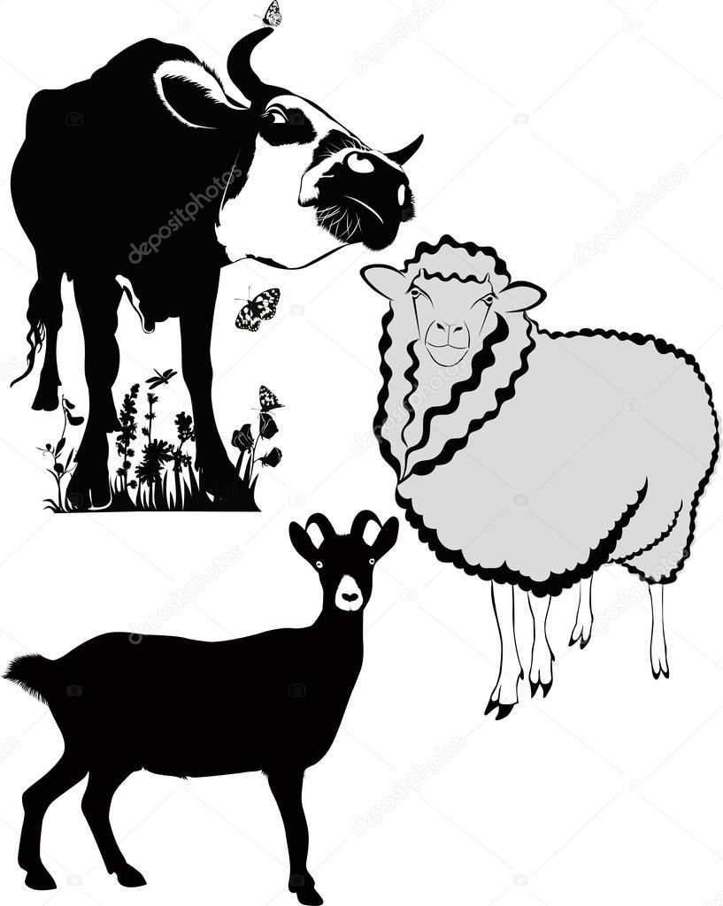 Рисунки коров и овец