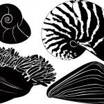Nautilus seashells anemones — Stock Vector #29953945