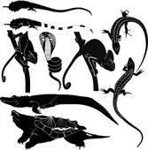 Reptiles animals — Stock Vector