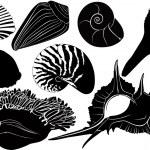 Nautilus seashells anemones — Stock Vector #31434253