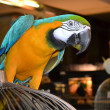 Stock Photo: Colorful parrot ara