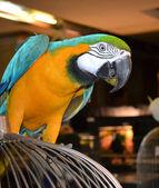 Colorful parrot ara — Stock Photo