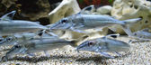 Ryby akwariowe — Zdjęcie stockowe