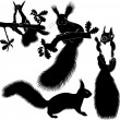 Set of silhouettes of squirrels — Stock Vector