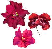 Three red Saintpaulia flowers — Stock Photo