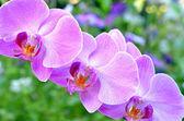 Květy orchidejí — Stock fotografie