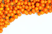 Seabuckthorn on a white background — Stock Photo
