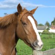 Royalty-Free Stock Photo: A horse at the fence