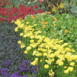 English garden flower bed plants — Stock Photo