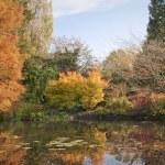 Engelska parken i höst — Stockfoto