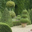 Stock Photo: English boxwood garden