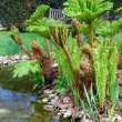 English Garden - Gunnera — Stock Photo #13528331