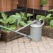 Gardening - watering can and flower pots - Stok fotoğraf