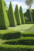 English boxwood garden design — Stock Photo