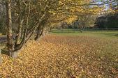 Autumn countryside, Suffolk, England — Stock Photo