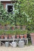 Cottage tuin gieters — Stockfoto
