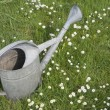 Metal watering can on lawn in spring blooming garden — Stock Photo