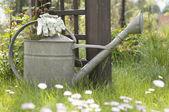 水まき缶および芝生の庭の手袋 — ストック写真