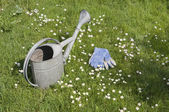 Watering can and garden gloves on blooming lawn — Stock Photo