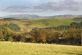 West Lothian, Scotland, November — Stock Photo