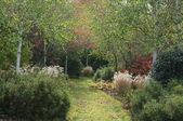 Woodland garden — Stock Photo