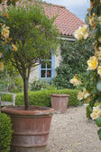 Blooming English cottage garden — Stock Photo