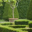 Boxwood garden design — Stock Photo