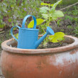 Watering can and flower pot — Stock Photo