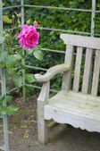 Red rose and garden bench — Stock Photo