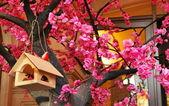Flowering Sakura — Stock Photo