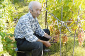 Senior man holding vine — Stockfoto