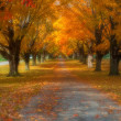 Fall Foliage — Stock Photo #13842104