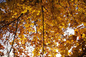 Mixed Forest in fall — Stock Photo