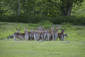 Deer in a zoo — Stock Photo