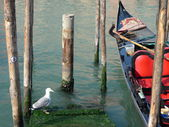 Seagull and gondola — Foto Stock