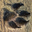 Dog footprint on sand — Stock Photo