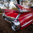 Stock Photo: Red Thunderbird car