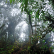Stock Photo: Dark misty mossy tropical rain forest jungle
