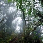 Dark misty mossy tropical rain forest jungle — Stock Photo