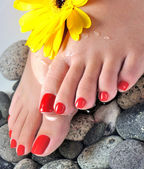 Foot spa close up or macro with flowers (vertical) — Stock Photo