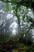 Dark misty mossy tropical rain forest jungle — Stock Photo