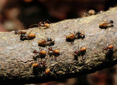 Busy ants on an old wood log — Stock Photo