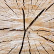 Cracked tree - Stock Photo